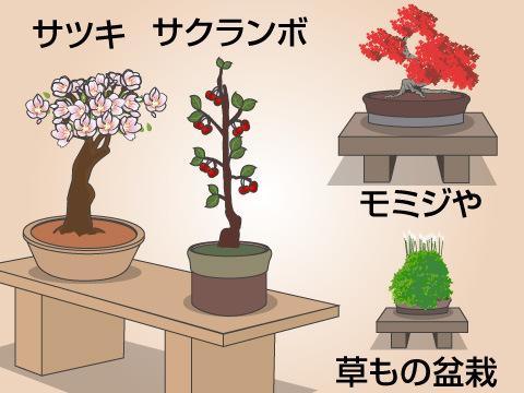 盆栽の種類