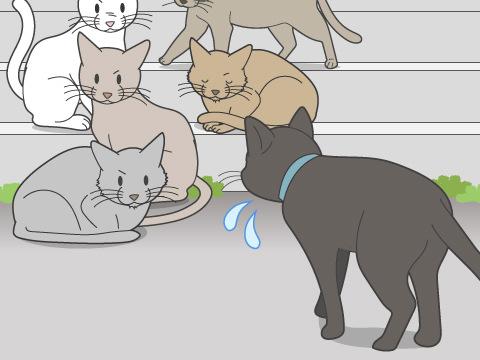 猫に友達は必要?