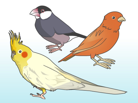 家で飼える鳥の種類