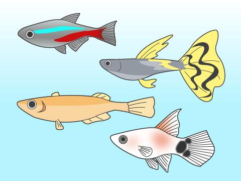 初心者でも飼いやすい魚は?