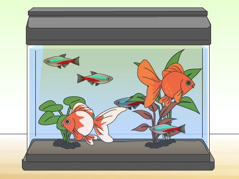 同じ水槽で飼っても良い魚と悪い魚