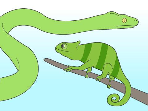 爬虫類の特性を知りたい