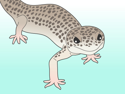 爬虫類は排泄を気にしなくても良い?
