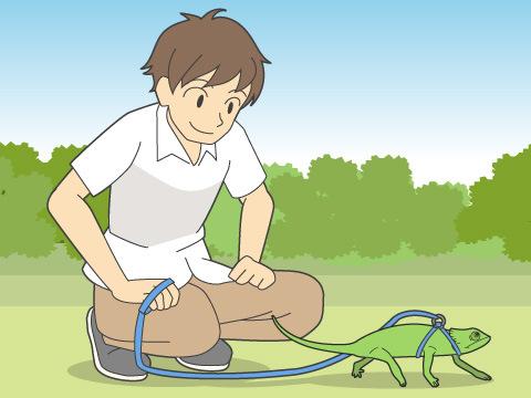 爬虫類も散歩に行くべき?