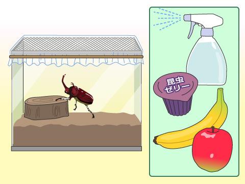 カブトムシなどの昆虫は飼いやすい?