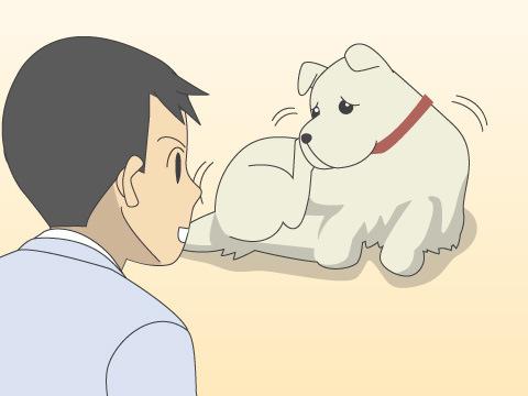 犬・猫の花粉症の症状