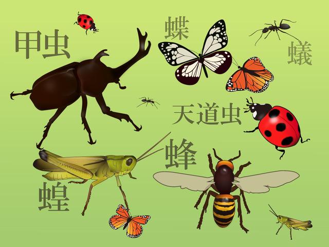 魚鳥虫動物植物の漢字辞典ホームメイトリサーチ スタディ